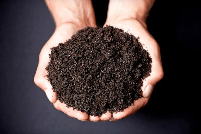 Black garden soil dirt cheap kitchener for Black garden soil