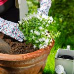 mulch soil Kitchener