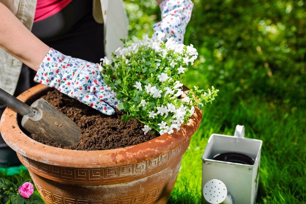 mulch soil Kitchener