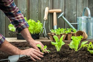 When to plant vegetables in Ontario
