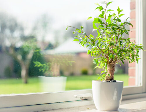 Starting Growing Your Plants Inside