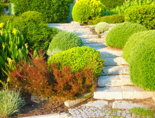 Best DIY Landscaping Projects