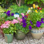 Tips for Successful Container Gardening | Dirt Cheap Kitchener