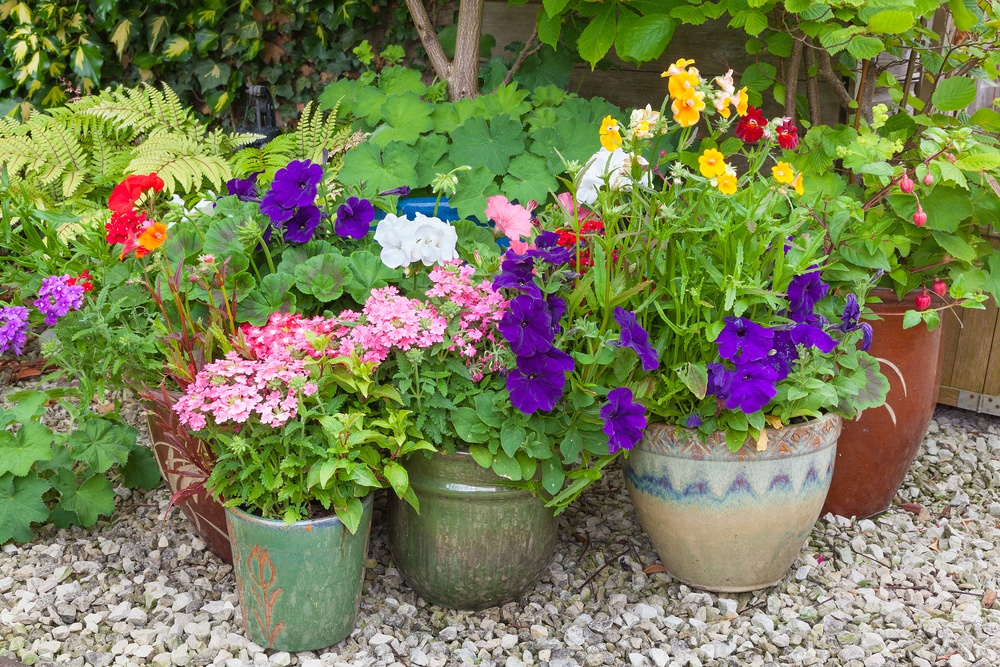 Tips for successful container gardening dirt cheap kitchener for Cheap topsoil