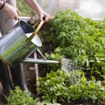 Conserve Water in Your Garden | Dirt Cheap Kitchener