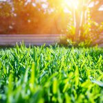 Grass Problems & How to Fix Them | Dirt Cheap Cambridge