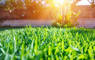 Grass Problems & How to Fix Them | Dirt Cheap Cambridge