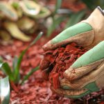 Mulching Do's and Don'ts | Dirt Cheap Kitchener