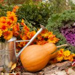 Fall Gardening Tips | Dirt Cheap Kitchener