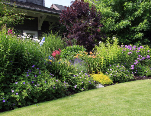 Tips for Year-Round Colour in Your Garden