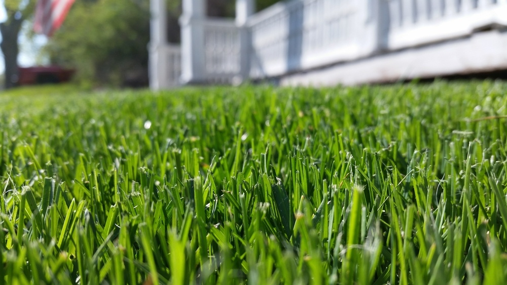 Learn how to seed a lawn from Dirt Cheap in Kitchener