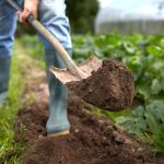 Common gardening mistakes from Dirt Cheap in Kitchener