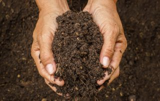 How to build healthy soil from Dirt Cheap in Kitchener
