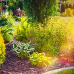Drought-tolerant gardening tips from Dirt Cheap in Kitchener