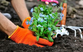 Common gardening problems from Dirt Cheap in Kitchener-Waterloo
