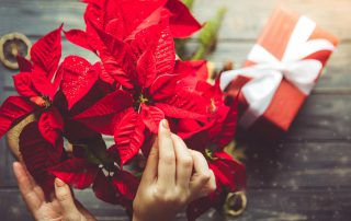 How to care for holiday plants from Dirt Cheap in Kitchener